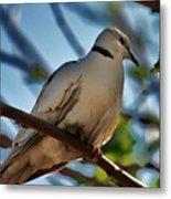 Birds Eye View Metal Print