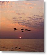 Birds Flying And Floating At Sunrise Metal Print