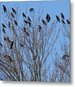 Birds In The Trees Metal Print