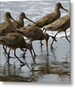 Birds Of A Feather 1 Metal Print