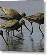 Birds Of A Feather 3 Metal Print