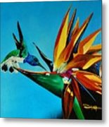Birds Of Paradise With White Necked Jacobin Hummingbird Metal Print