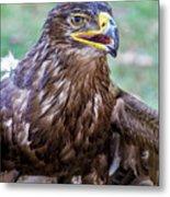 Birds Of Prey Series 3 Metal Print