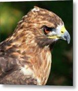 Birds Of Prey Series 5 Metal Print