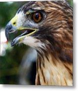 Birds Of Prey Series Metal Print