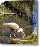Birds Of The Everglades Metal Print