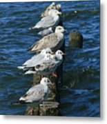 Birds Of The Sea Metal Print