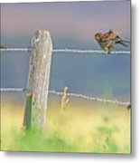 Birds On A Barbed Wire Fence Metal Print
