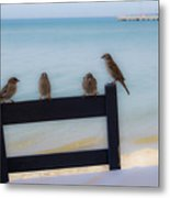 Birds On A Chair Metal Print
