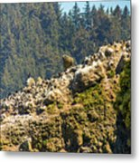 Birds On The Rocks Metal Print