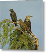 Birds-on-watch Metal Print