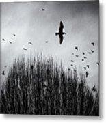 Birds Over Bush Metal Print