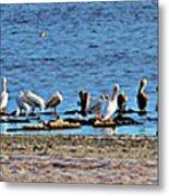 Birds Panorama Metal Print