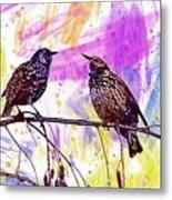 Birds Stare Nature Songbird  Metal Print