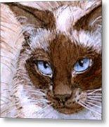 Birman Cat - Blue Eyes. Metal Print