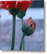Birth Of A Flower Metal Print