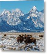 Bison At The Tetons Metal Print
