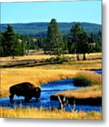 Bison Metal Print by Carrie Putz