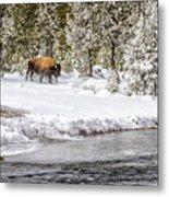 Bison Country  8101 Metal Print