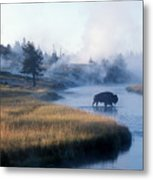 Bison Crosses The Firehole River Metal Print