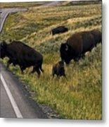 Bison Disrupting Traffic Metal Print