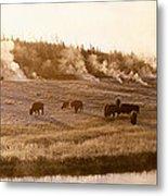 Bison Firehole River Yellowstone Metal Print