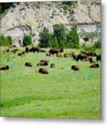 Bison Herd II Metal Print