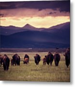 Bison Herd Into The Sunset Metal Print
