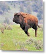 Bison In Flight Metal Print