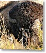 Bison In Hiding Metal Print