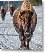 Bison In The Road - Yellowstone Metal Print