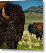 Bison On The Plain Metal Print by Paul W Sharpe Aka Wizard of Wonders