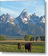 Bison Range Metal Print