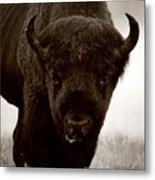 Bison Showdown Metal Print