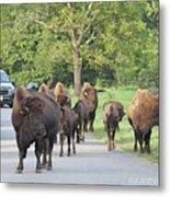 Bison Traffic Jam Metal Print