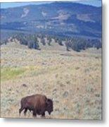 Bison Trail Metal Print