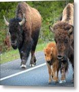 Bison Walking Metal Print