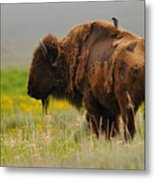 Bison With Cowbird On Back Metal Print