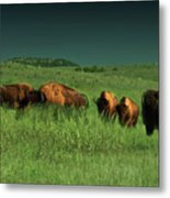 Bisons In The Prarie Metal Print