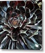 Black Aeonium Metal Print