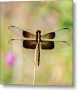 Black And Gold Dragonfly Metal Print
