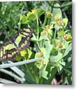 Black And Green Butterfly Metal Print