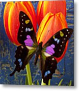 Black And Pink Butterfly Metal Print