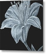 Black And White Asiatic Lily Metal Print