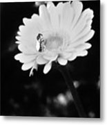 Please Remember I Am A Bee On A Flower Metal Print