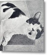Black And White Cat Lounging Metal Print