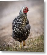 Black And White Chicken Metal Print