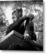 Black And White Chimpanzee Metal Print