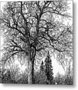Black And White Christmas Metal Print