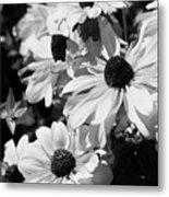 Black And White Coneflowers Metal Print